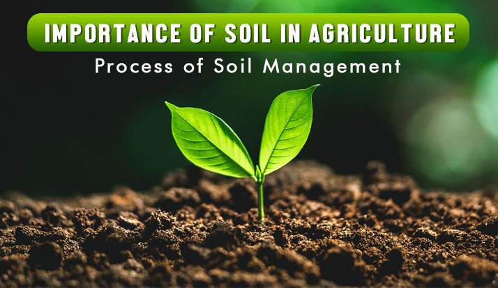 Importance of Soil in Agriculture - Process of Soil Management